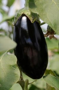 DSC_0881 aubergine