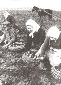 Estland kartoffelkoner