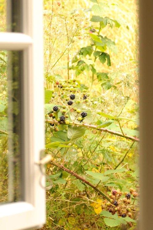 brombær vindue