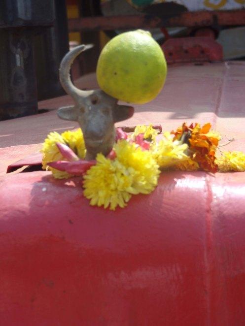 Pondicherry.hellig ko på køler