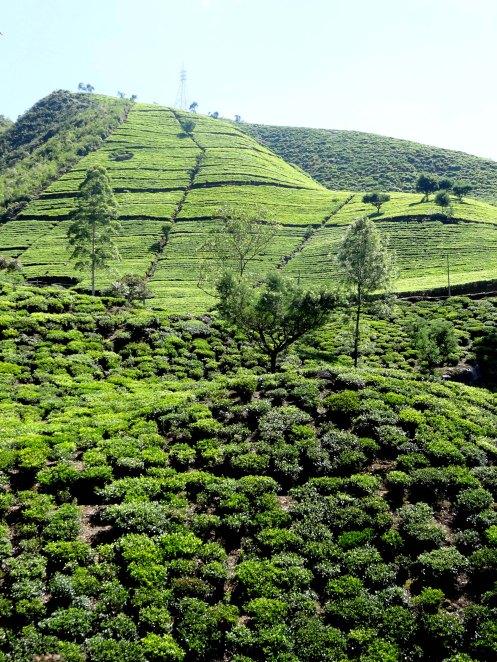 Sri Lanka.thebjerge.2