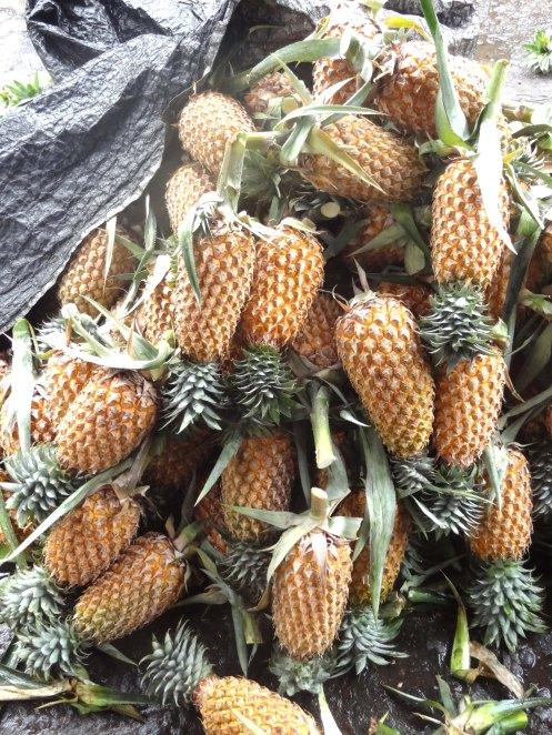 Sri Lanka.ananas