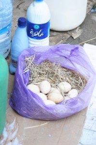 Marokko.æg
