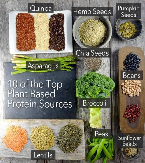 proteiner 1