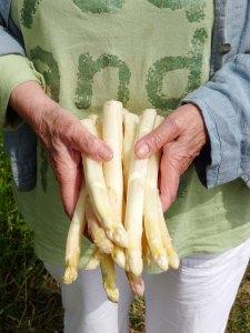 asparges hvide