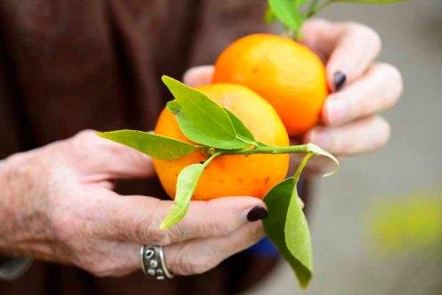 gartneri.clementiner